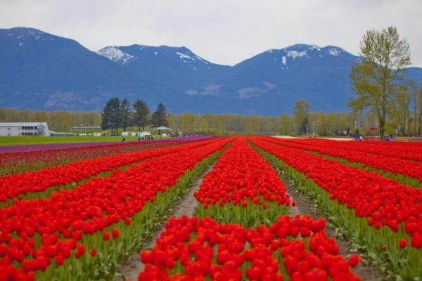 10 Best Places In The City of Chilliwack 7