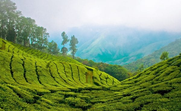 Munnar : A Gorgeous  Holiday Gift for Every Nature lover.. 4