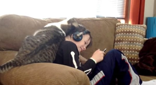 how-cats-say-i-love-you-show-affection-humans-cat-rubs-boy.2