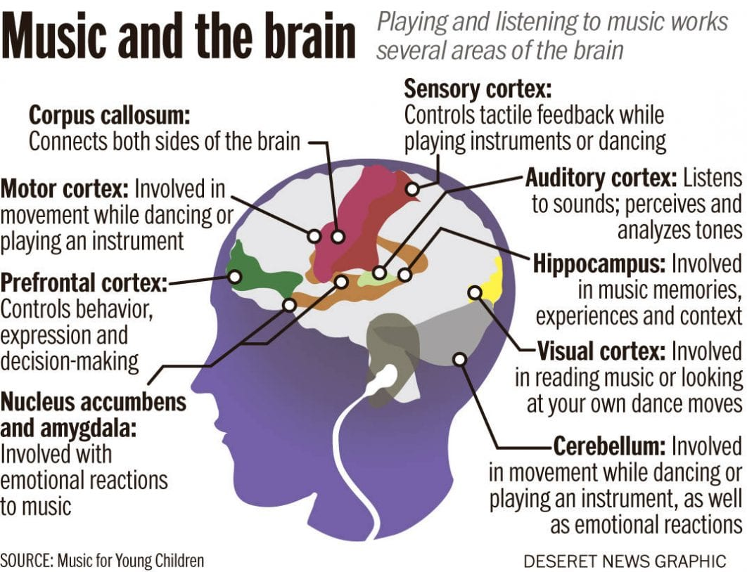 Image result for musical instruments effect on brain