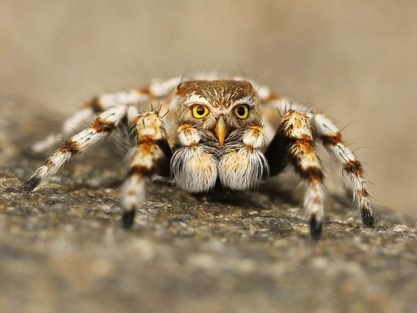 10 Most Weird Phobias You Will Ever See 13