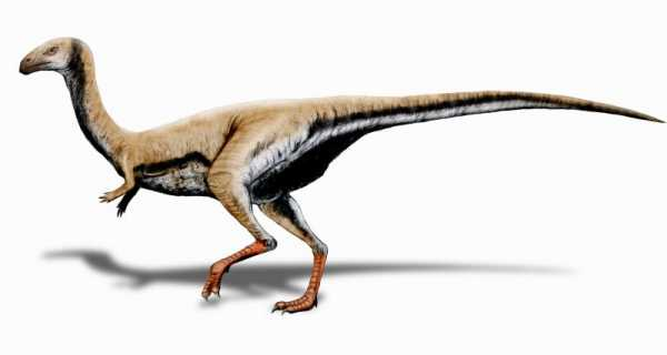 The Top Cute Baby Dinosaurs Ever 9
