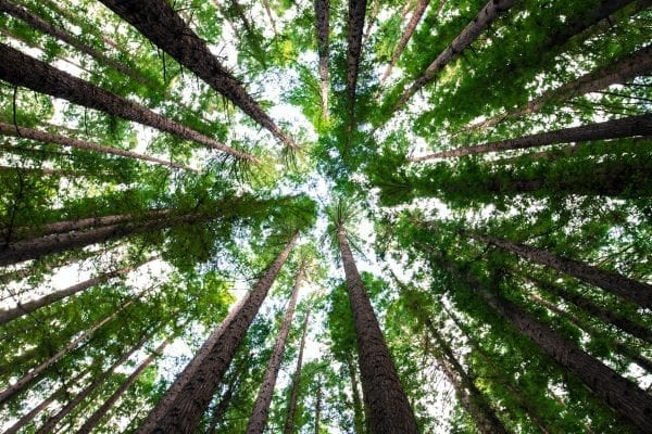Did You Know There is a Phobia of Trees? Why it Happens 4