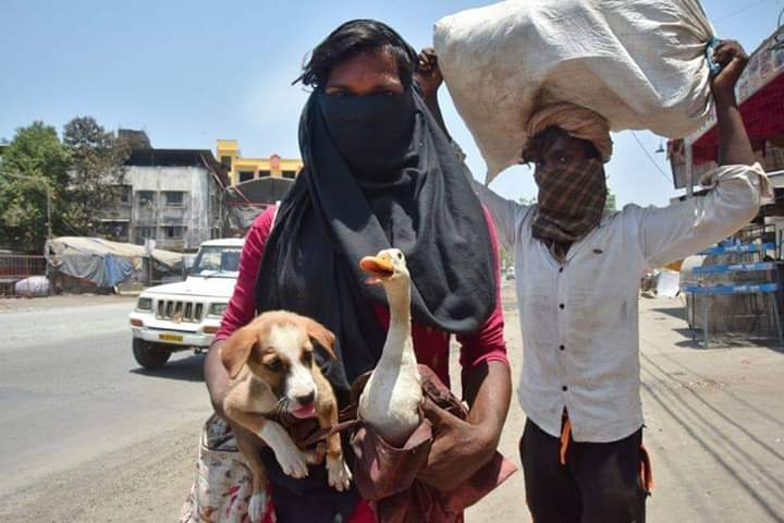 Migrant Workers Carry Their Pets For Hundreds of Kilometers 11