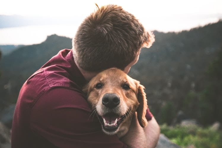 The Top 10 Amazing Reasons To Get A Dog 4