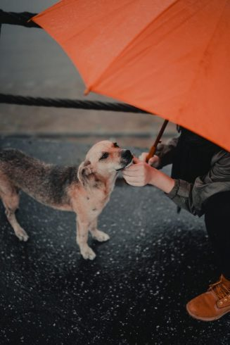 The Top 10 Amazing Reasons To Get A Dog 6